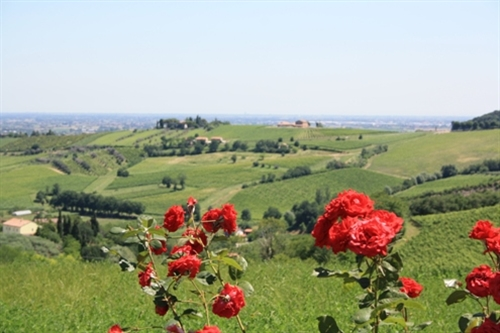 WINE AND DINE ROUTE TROUGHT THE HILLS OF FORLI' AND CESENA